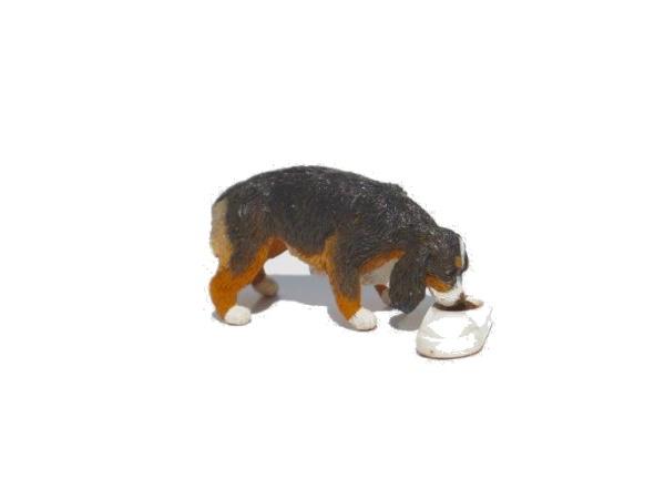 Daisy (Spaniel eating)600x450