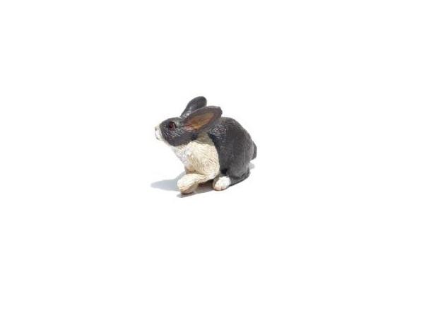 Domestic Rabbit 600x450